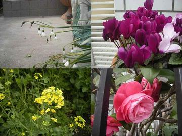 Flower_0101