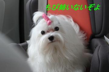 20090921_0008